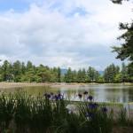 Pure Land (Buddhism) Garden in Motsuji Temple (Hiraizumi)
